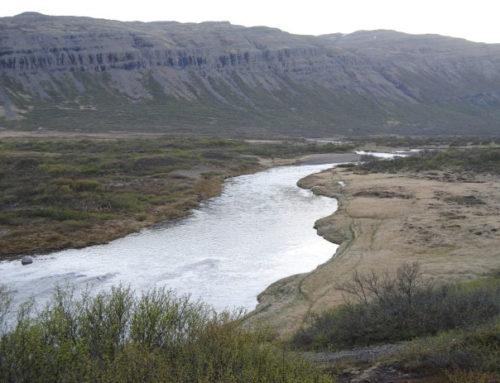 Móra á Barðaströnd