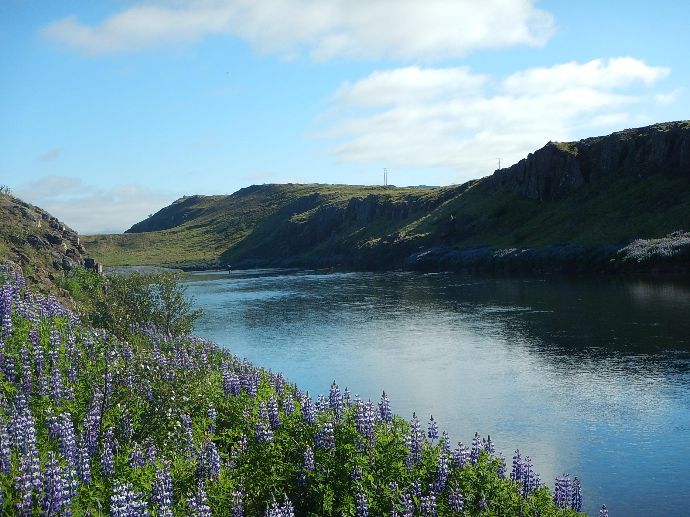 Norðurá - Kálfhylsbrotið